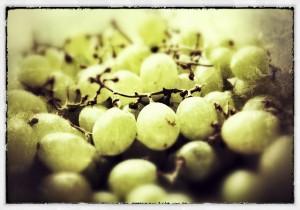 białe-winogrona